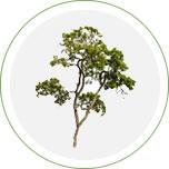 taille des arbres rodez et aveyron aqua vert