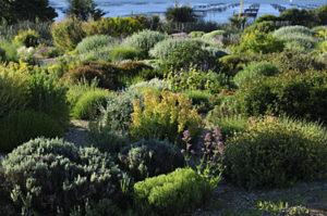 paysagiste Rodez, massif couvre sol, aqua vert